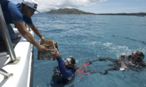 A box of nursery-grown coral is handed to diver