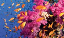 beautiful colours of the coral reef
