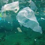 marine plastics and debris