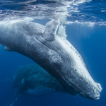 Japan says it's time to allow sustainable whaling