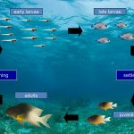 Secrets of fish population changes revealed