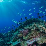 Heat Waves May Cause Fish to Flee Reefs
