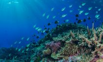 A school of fish swims in the Coral Sea