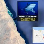Shark attack off Egyptian coast