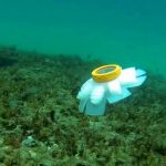 The robotic jellyfish propel themselves with rubber tentacles