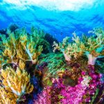 Coral reefs are under threat