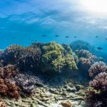 Scientists Find Some Hope for Coral Reefs