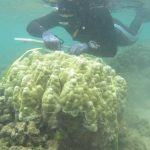 Are Hawaiian Corals Adjusting to Warmer Temperatures?