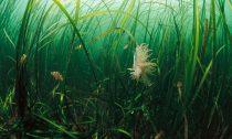 Dense Sea Grass