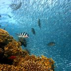 Coral Reef in Italy Discovered