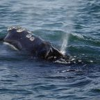 Right whale protection zone is expanded