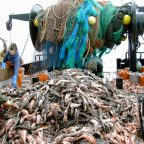 Why Overfishing Must Stop