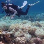 Great Barrier Reef hard coral cover close to record lows