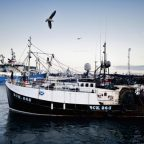 Fears cod stock could be 'decimated' due to trawling loophole