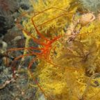 Europe's largest marine protected area proposed