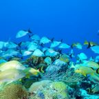 Protecting Egypt's colourful coral reefs with Green Fins