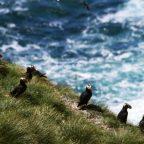 3 Ways Canada Is Protecting Its Ocean