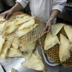 The Surprise Middleman in the Illegal Shark Fin Trade: The USA