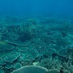 Brazil navy scrambles to save Abrolhos coral reefs from oil spill