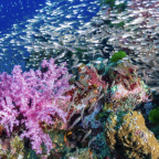 Healthy coral reefs need fish mix to survive
