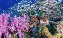 A coral reef in the Similan Islands