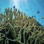 UNEP launches campaign on coral loss due to climate change