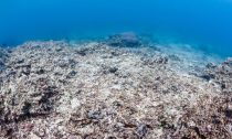 Ocean acidification is yet another effect of climate change that's killing the world's coral reefs.
