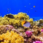Protect Red Sea's Coral Reefs, Scientists Urge