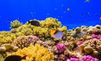 Red Sea Coral Reef with abundant fish