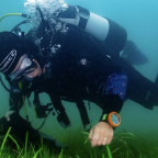 Climate change: Carbon-reducing seagrass planted off Welsh coast