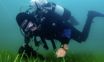Diver planting seagrass beds