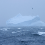 Tracking data used to identify biodiversity hot spots in Southern Ocean ecosystems