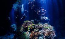 Solomon Islands Reef viewed by diver