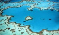 A coral reef impacted by a severe bleaching event