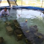 Sexual reproduction of corals in captivity achieved for the first time in Mexico