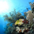 Pollution wreaks havoc on corals' immune systems