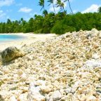 Dead coral lying on a tropical beach