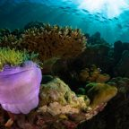 In high seas, scientists see a lifeline for coral reefs