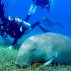 Egypt ranks no 2 as best world destination for diving in 2020