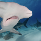 Call for evidence on protecting endangered shark species launches