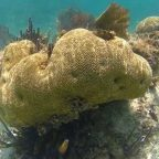 Coral decline - is sunscreen a scapegoat?