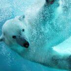 Ocean mammals face extinction