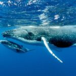 Whales defy the odds of getting cancer