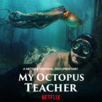 Saving the kelp forest of 'My Octopus Teacher'