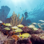 Declines in coral colonies throughout the world