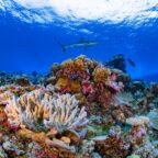 Ailinginae Atoll in the Marshall Islands. (photo by Greg Asner; courtesy of Allen Coral Atlas)