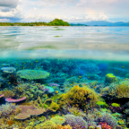 Some coral communities are doing better than expected