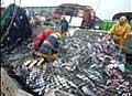 Fishing_21022005
