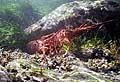 LobsterTrap_030206