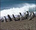 Penguins_050207